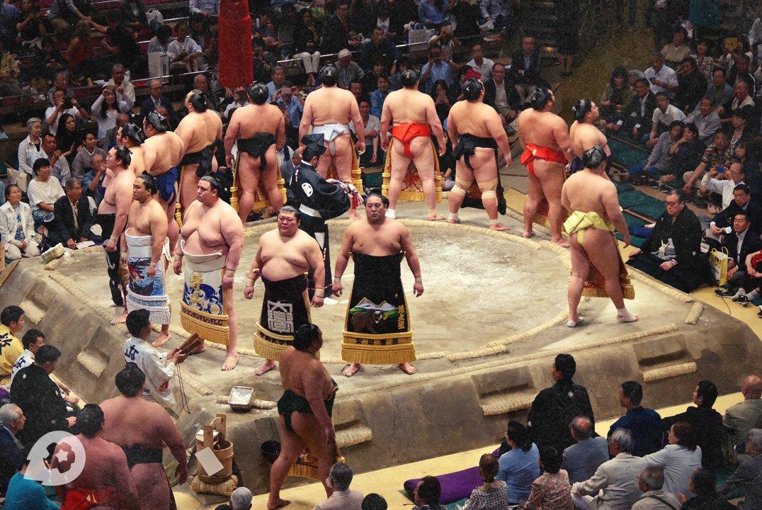 Как ставить на сумо